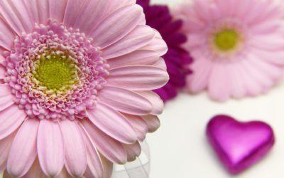 pixabay flower heart