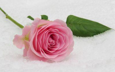 roos op sneeuw